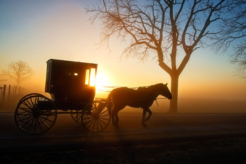 Tired Horse and Buggy at Sunrise