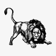 Launching lion vintage drawing