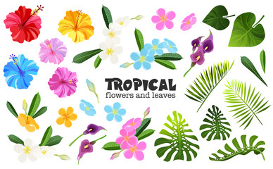tropical objects set
