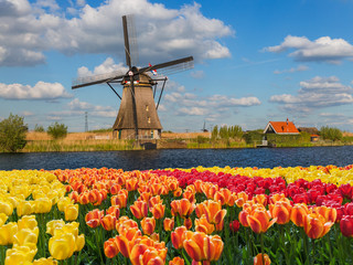 Windmills and flowers in Netherlands Fototapete