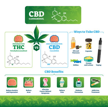 CBD vector illustration. Labeled medical THC cannabis benefits infographics
