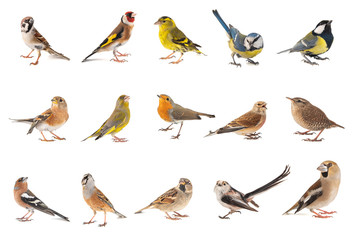 Printed roller blinds Bird Set of small song birds isolated on white background