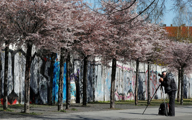 A man takes pictures of flowers during cherry blossom season at Bornholmer Strasse in front of the remains of the Berlin Wall in Berlin