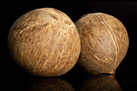 Group of two whole young fresh bio coconut isolated on black glass