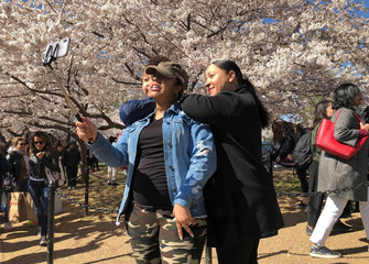 Tourists pose for pictures among the cherry blossom trees along the Tidal Basin as thousands of people flock to see the annual blooms in Washington