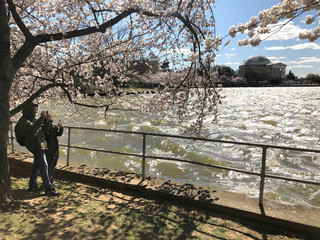 Tourists take photos among the cherry blossom trees along the Tidal Basin as thousands of people flock to see the annual blooms in Washington