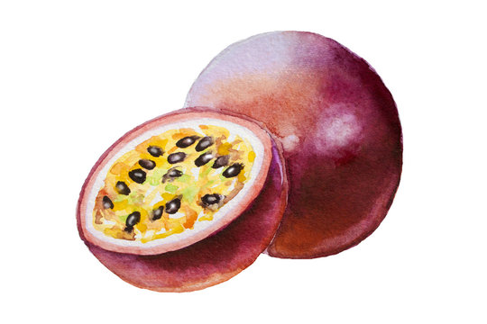 Hand drawn watercolor painting on white background. Watercolor illustration of passion fruit