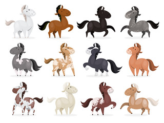 Horse wild or domestic animal set . Collection