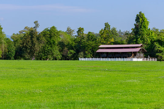 The green meadows and animal shelter near the forest.
