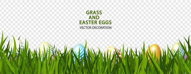 Green grass with Easter eggs on transparent background.Vector illustration