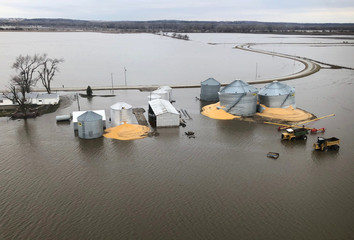 The contents of grain silos which burst from flood damage are shown in Fremont County, Iowa