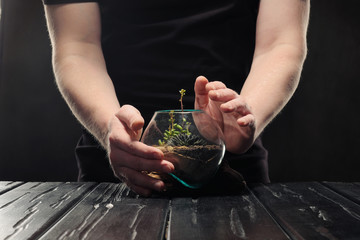 Two male hands are caring for a small garden with tropical plants, succulents and sand in a glass pot.