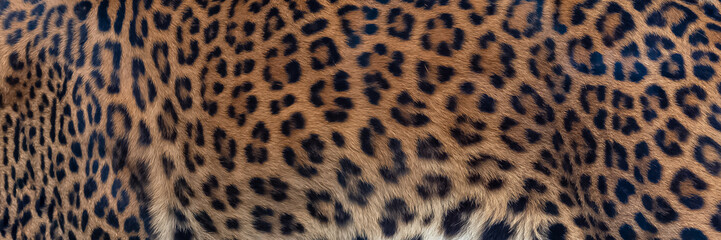 Leopard, panther, the skin, unique pattern on the skin
