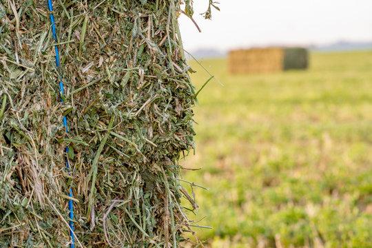 Large Hay Bales in Field