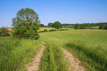 Feldweg durch Landschaft mit Getreidefeldern im Frühling in der Holsteinischen Schweiz in Schleswig-Holstein, Deutschland