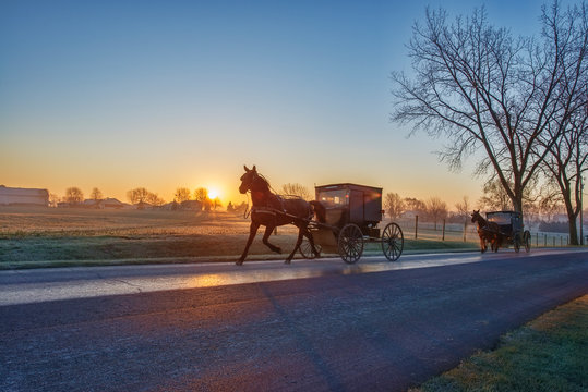 Amish Buggies at Dawn