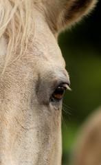Fotobehang Paarden Close Up of a Horse Eye