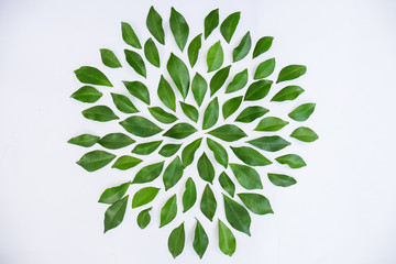 Wall Mural - green leaves frame on white background. Banner flat lay. Tropical plant green leaf spring time, environment concept. Close up studio photography.