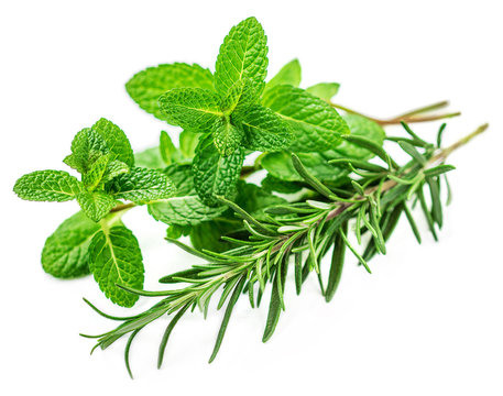 Fresh herbs isolated on white background. Fresh mint and rosemary leaf.