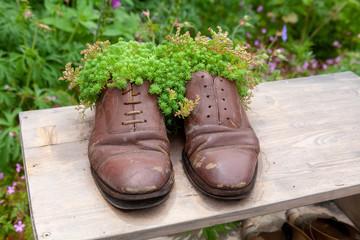 Jardin insolite - pot de fleur en chaussure