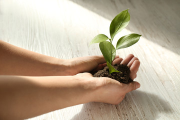Female hands with soil and green plant on wooden background Fototapete