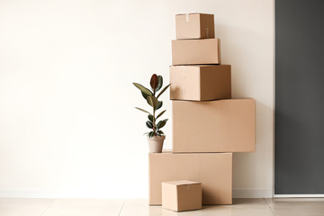 Moving boxes with plant near light wall
