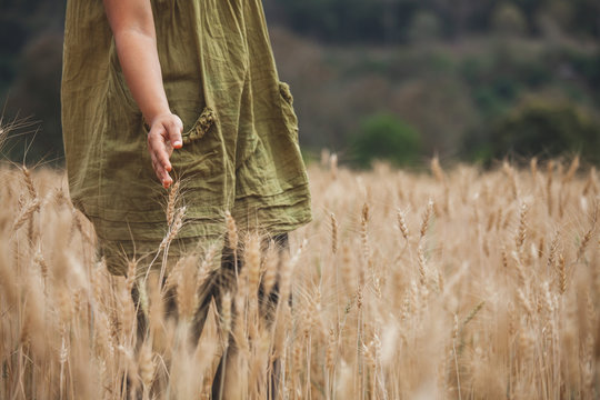 Woman hand touching the ears of wheat with tenderness in the barley field