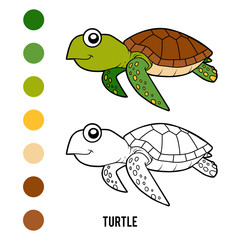 Coloring book, Turtle