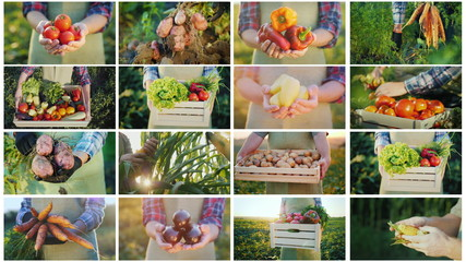 Montage of video frames with the hands of farmers who keep vegetables from their fields. Organic products from the manufacturer's concept