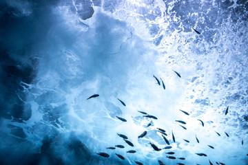海中の魚群