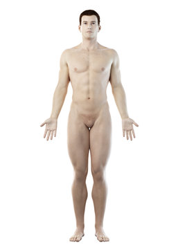 3d rendered medically accurate illustration of a mans body