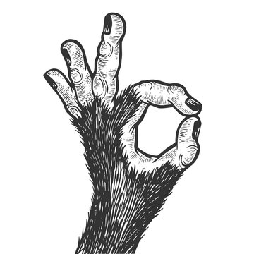Monkey animal hand with ok gesture sketch engraving vector illustration. Good sign. Scratch board style imitation. Hand drawn image.