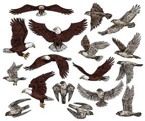 Birds of prey, predatory eagle and hawk falcons