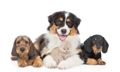 Group of puppies with kitten. Isolated on white background Wall mural
