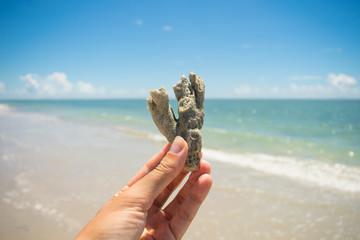 Hand holding a piece of broken coral at Sossego beach - Ilha de Itamaraca, Brazil