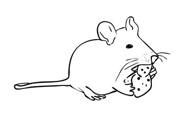 Vector illustration, isolated rat eating a piece of cheese in black and white colors, outline hand painted drawing