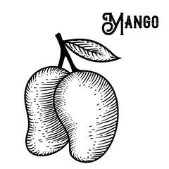 Mango Hand drawing