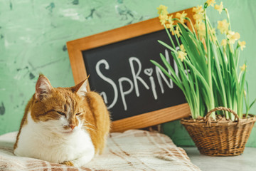 Spring cat coming concept background