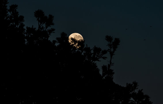 moon in the branches