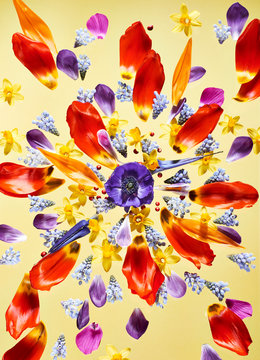 Flower petals on yellow background