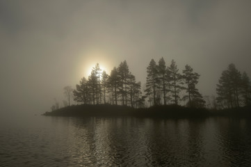 View of scots pines tree in fog during sunrise