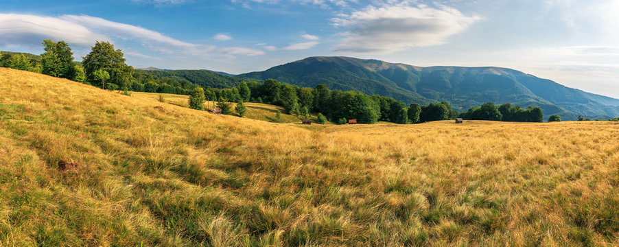 panorama of beech forest in mountains. meadows in weathered grass. range of ridges in the distance. wonderful carpathian summer countryside. fine weather in august.