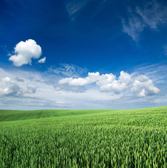 Wall Mural - field and blue sky