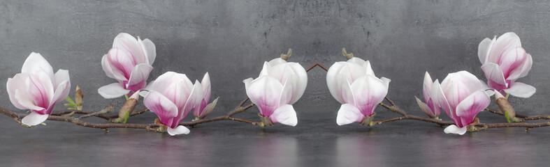 Wunderschöner blühender Magnolienzweig Panorama Fototapete