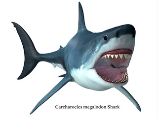 Megalodon Predator Shark with Font - Megalodon was an enormous carnivorous shark that roamed the oceans of the Pleistocene Period.