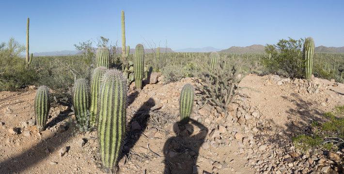 DSC2549a6000a Cactus - Saguaro National Park - Tucson Mountain District