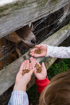 Children feeding petting zoo animals