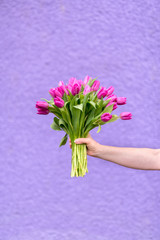 Woman holding a bouquet of fuschia tulips against purple wall