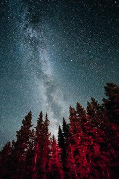Red trees under milky way galaxy