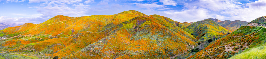 Panoramic view in Walker Canyon during the superbloom, California poppies covering the mountain valleys and ridges, Lake Elsinore, south California